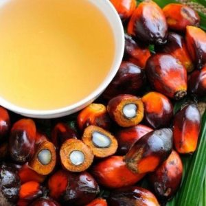 facts-palm-oil-laura-busquets